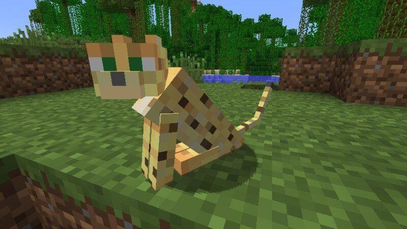 Cómo domesticar un ocelote en Minecraft
